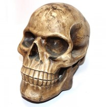 Terracotta Clay Big Human Skull SKU-2208