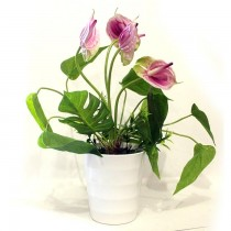 Natural Looking Plastic Plant With Flower SKU-3102